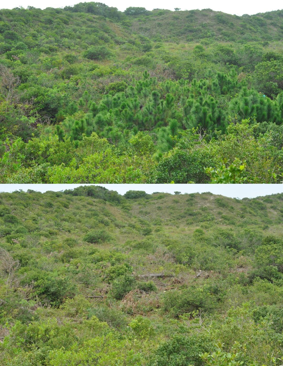 Testimonies Conservation Areas In Brazil